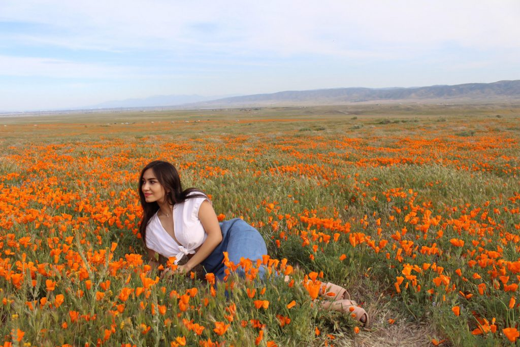 Antelope Valley Poppy Blooms! Travel California